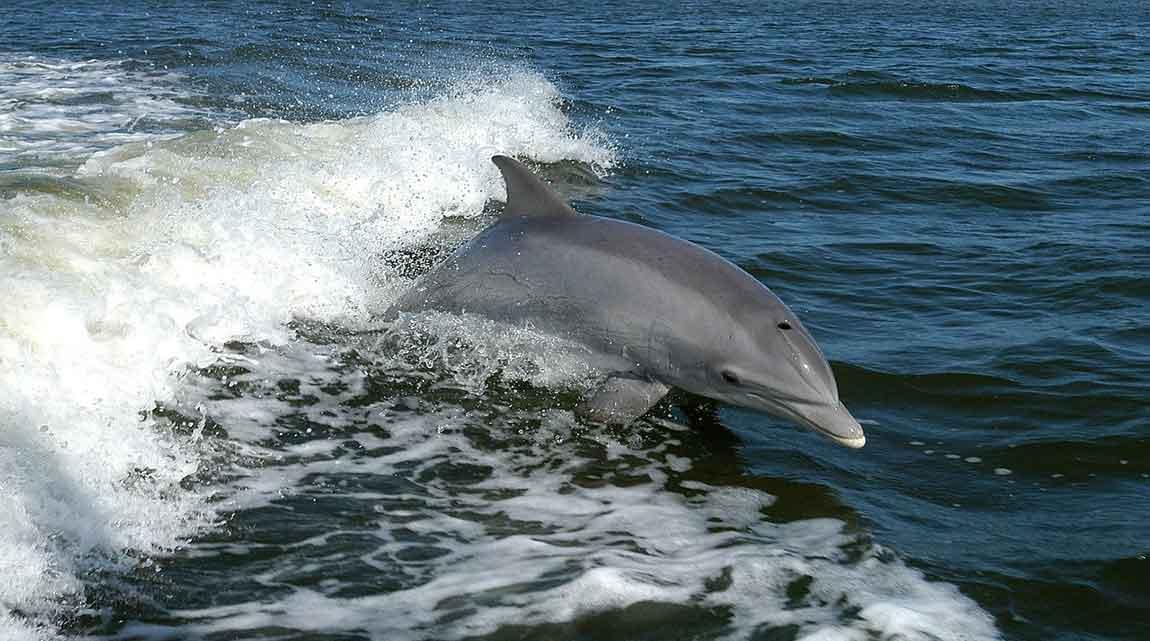 bottlenose dolphin Cyprus